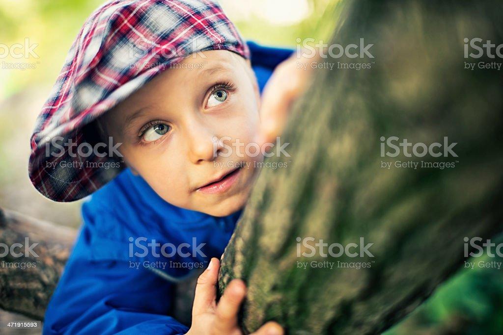 Little boy climbing tree royalty-free stock photo
