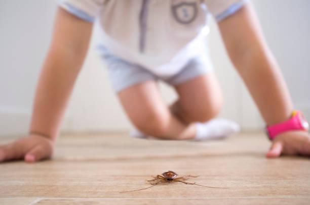 Kleiner Junge in der Nähe von Kakerlake im Haus Stock – Foto