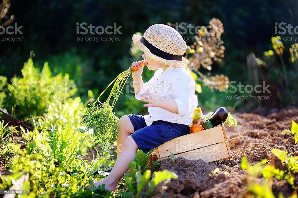 Little boy eating organic carrot sitting on wooden crate stock photo