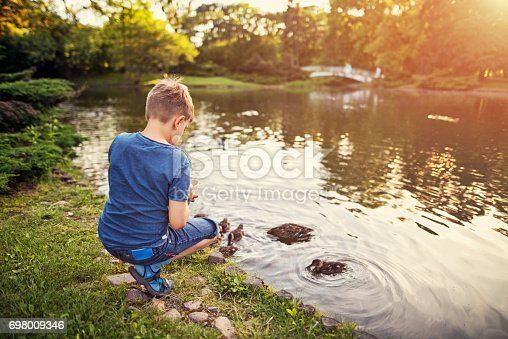 Little boy aged 7 is feeding cute ducks swimming in the city park pond.