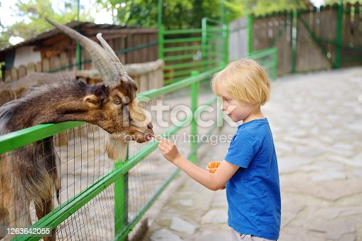 Little boy feeding goat. Child at outdoors petting zoo. Kid having fun in farm with animals. Children and animals. Fun for family with kids on summer school holidays.