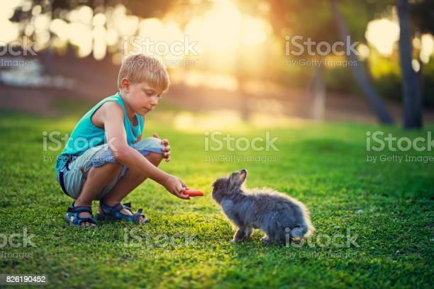 Little boy feeding his rabbit in the backyard picture id826190452?b=1&k=6&m=826190452&s=612x612&h=fhln5ac4njkfktrikrscwrubi9b2z1jdww7 rsvhaqg=