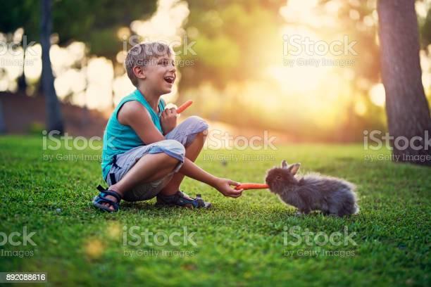 Little boy feeding his rabbit in the backyard picture id892088616?b=1&k=6&m=892088616&s=612x612&h=0ebieblgkayuk9mxdsuvbqut4qzwfglxjo5wmytyzbu=