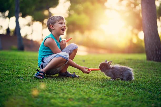 Little boy feeding his rabbit in the backyard picture id892088616?b=1&k=6&m=892088616&s=612x612&w=0&h=lldyzh8e2mb3n1 qf0ogqluvjspcfev8izy vsevsju=