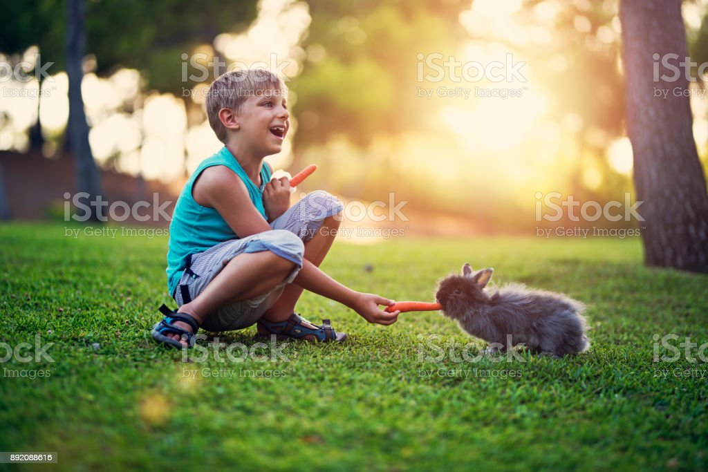 Little boy feeding his rabbit in the backyard stock photo