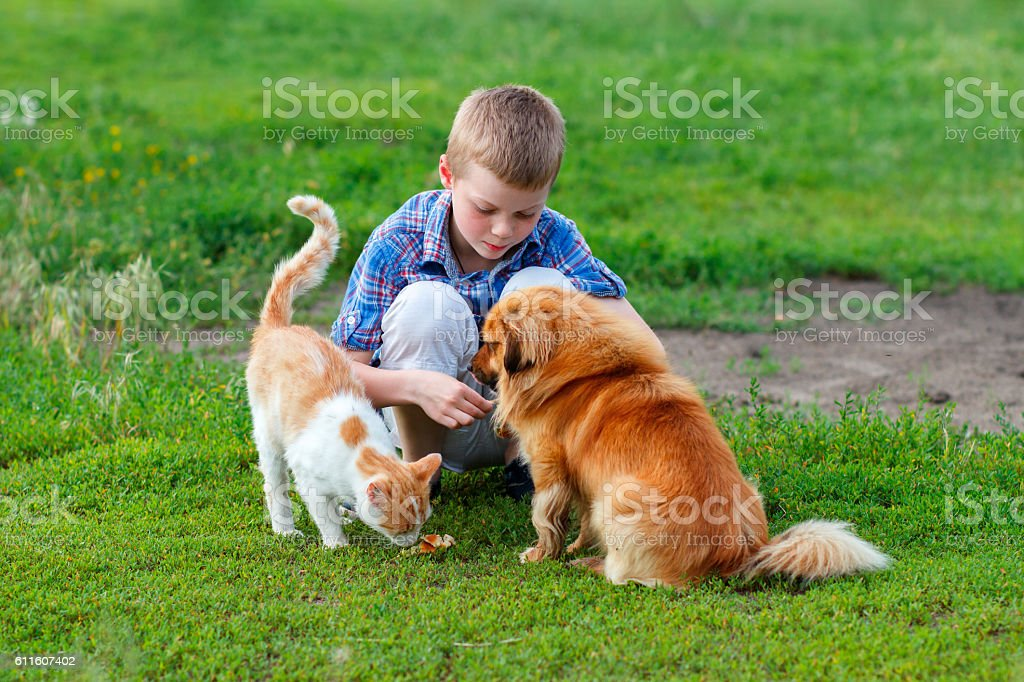 little boy  feeds homeless cat and redhead stray dog – Foto
