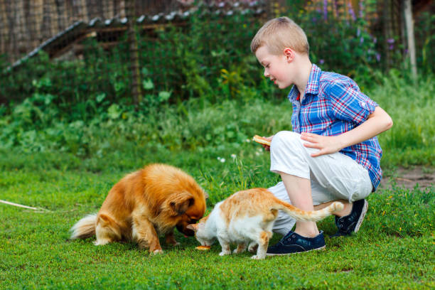 Little boy feeds the stray cat and redhaired homeless dog picture id660374168?b=1&k=6&m=660374168&s=612x612&w=0&h=rxkqpy zanv w5lvwrfwqo8482wi7lp1yao avybofc=