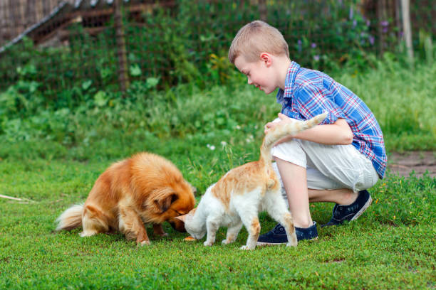 Little boy feeds the stray cat and redhaired homeless dog picture id694117402?b=1&k=6&m=694117402&s=612x612&w=0&h=9z15i1oa6c iazuotbsw6mlodlq3dws3ihkn1k 3rga=