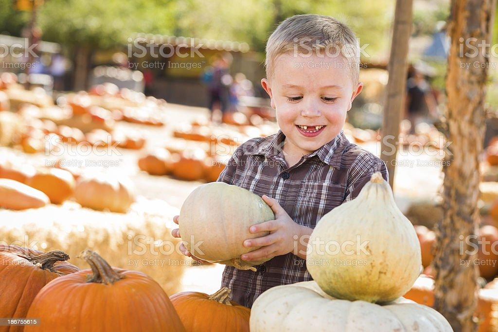Little Boy Gathering His Pumpkins at a Pumpkin Patch stock photo