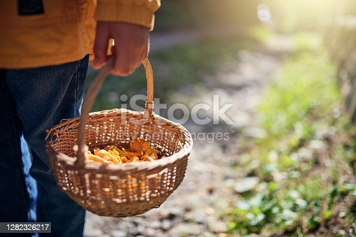 Little boy returning from forest with a basket full of chanterelles. The boy is holding a basket. Nikon D850
