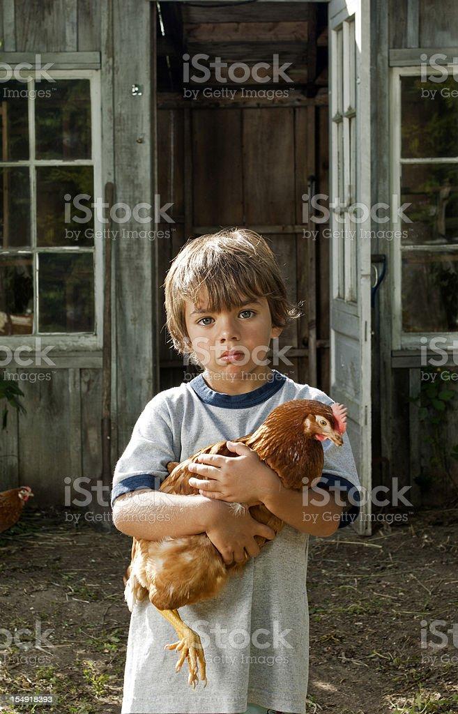 Little boy holding a free range chicken royalty-free stock photo