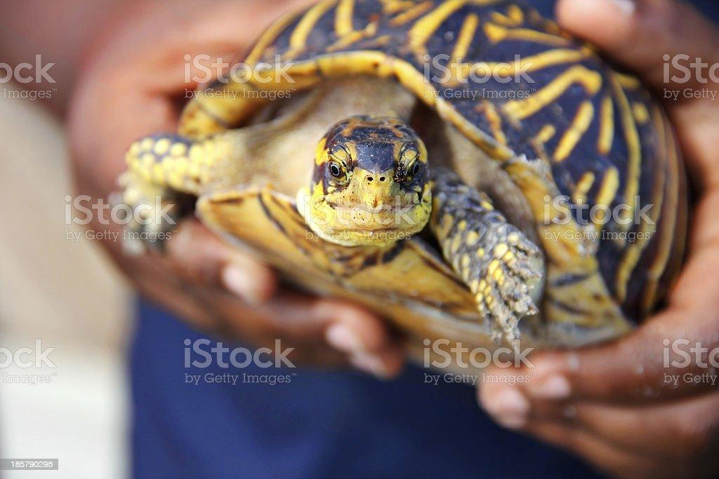 little boy holding a turtle - Royalty-free Amphibian Stock Photo