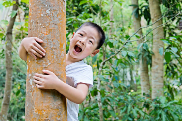 Little boy hugging a tree Little asian boy hugging a tree. tree hugging stock pictures, royalty-free photos & images