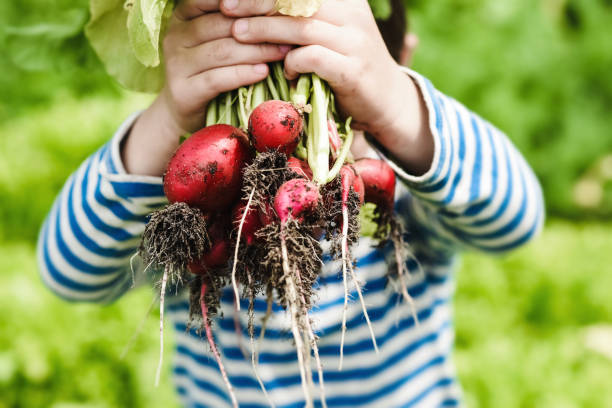 Kleiner Junge in einem Gemüsegarten – Foto