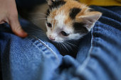 Little Boy in a Yellow Shirt and Blue Jeans Holding an Adorable Domestic Calico Kitten