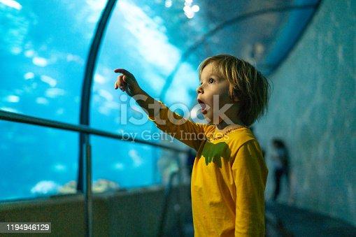 Cute little boy is so excited in public aquarium