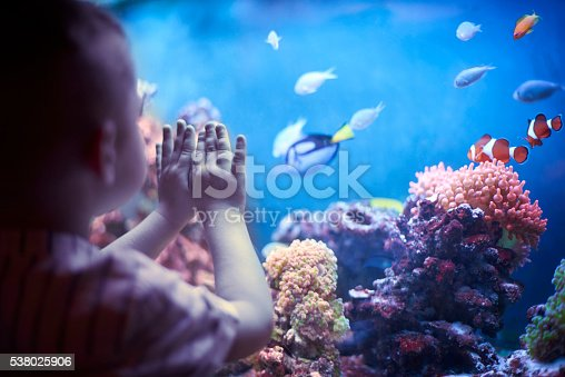 istock Little boy in the aquarium 538025906