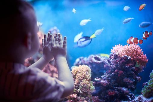 istock Little boy in the aquarium 538025906