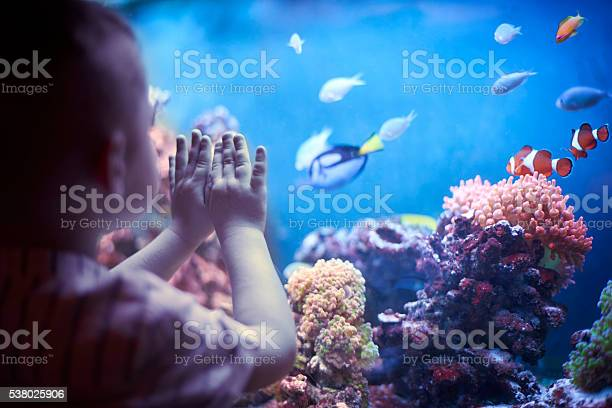 Little boy in the aquarium picture id538025906?b=1&k=6&m=538025906&s=612x612&h=f7nmakco aby2unacjcmexzczbsxsqxso hq9 vwmuq=