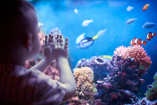 little boy in the aquarium - boy looking out window stock pictures, royalty-free photos & images