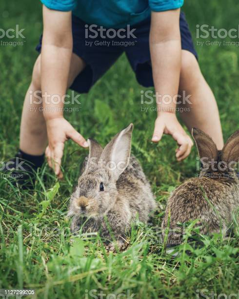Little boy is trying to catch a rabbit picture id1127299205?b=1&k=6&m=1127299205&s=612x612&h=8puov gwi8qqhy5z mhr2csj kpkvhmnxodlal ivoq=