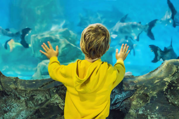 Baby Shark Stock Photos, Pictures & Royalty-Free Images ...