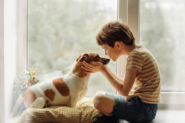 niño besa al perro en la nariz en la ventana. - mascota fotografías e imágenes de stock