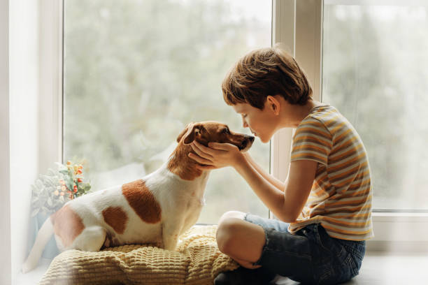 little boy kisses the dog in nose on the window. - pets imagens e fotografias de stock
