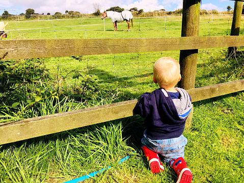 Little boy looking at horse through fence