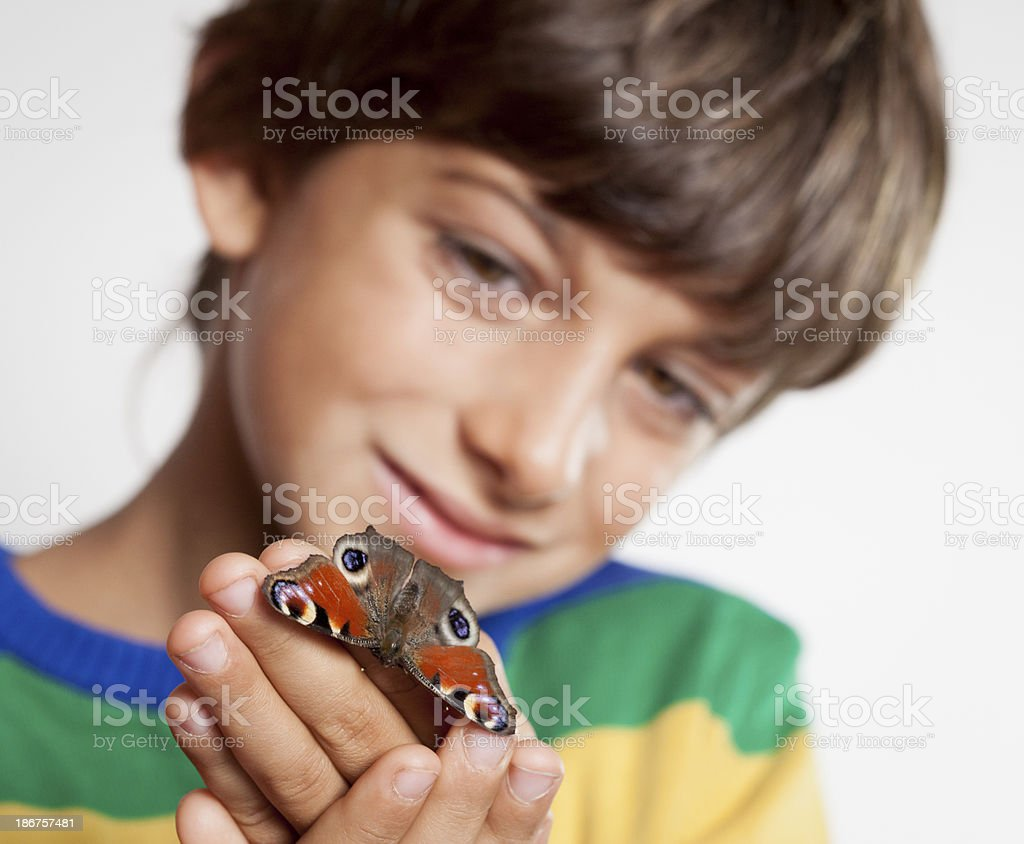 Little Boy Looking Butterfly On Hand royalty-free stock photo