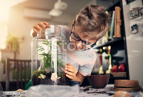 Little boy creating bottle garden at home. The boy has just finished potting little plants inside bottle to create miniature living eco-system and beautiful home decoration. Nikon D850