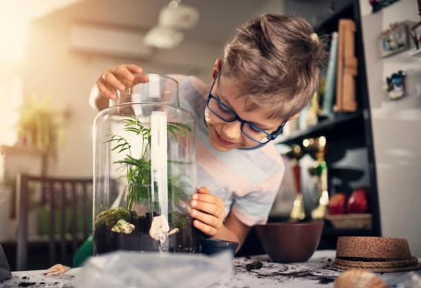 Kleiner Junge macht Pflanzenflaschengarten – Foto