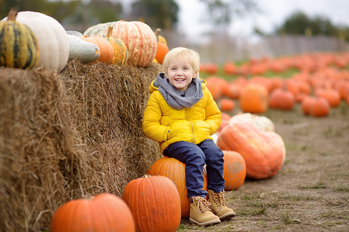 Little boy on a tour of a pumpkin farm at autumn. Child sitting on giant pumpkin. Pumpkin is traditional vegetable used on American holidays - Halloween and Thanksgiving Day.