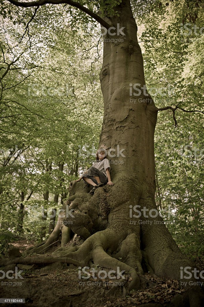 little boy on an old huge beech tree royalty-free stock photo