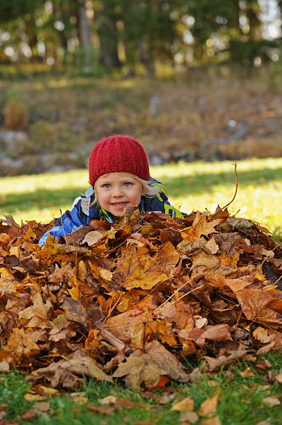 Little boy palying with autumn leaves stock photo