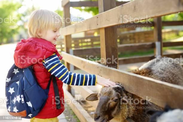 Little boy petting sheep child in petting zoo kid having fun in farm picture id1162241816?b=1&k=6&m=1162241816&s=612x612&h=zgpxknqy0eoubqayjrtmdonqwbgybejq5meyhzirnzu=