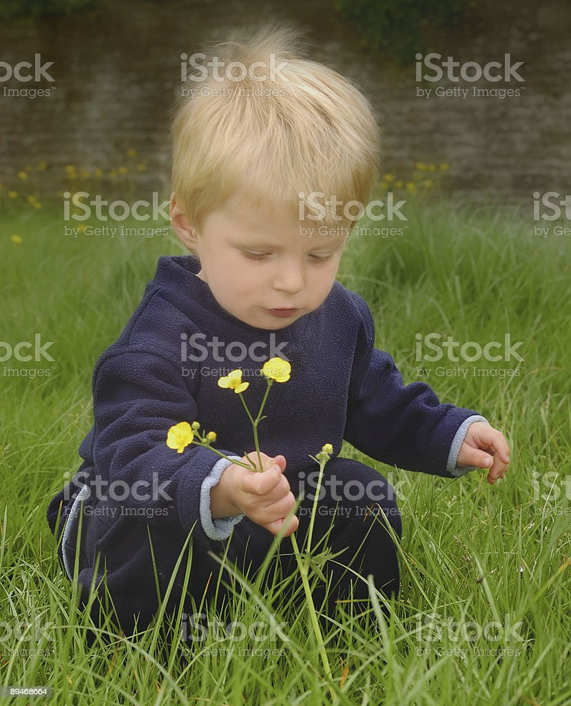 Little boy picking wildflowers royalty-free stock photo