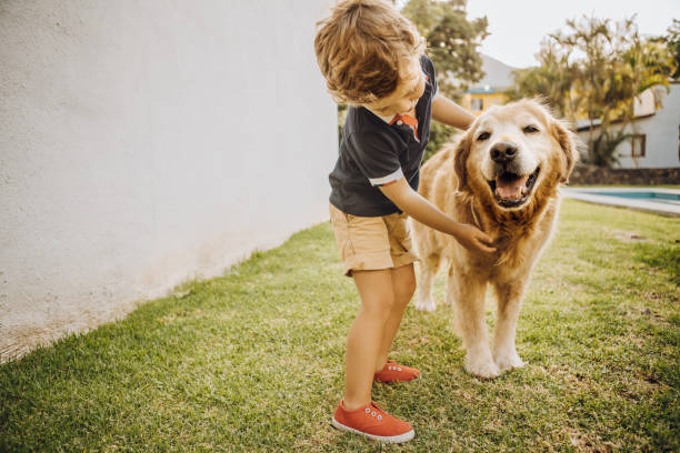 Little boy playing with a dog Little boy playing with a dog retriever stock pictures, royalty-free photos & images