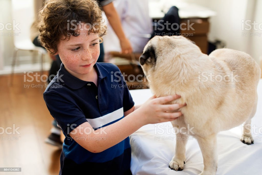Little boy playing with a pug royalty-free stock photo