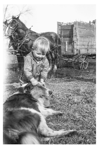 Little boy dressed in coveralls pulling hair of collie dog outdoors on farm in autumn 1928. Wagon load of ear corn with draft horses pulling it in background. Wellman, Iowa, USA. Scanned film with grain, soft focus.