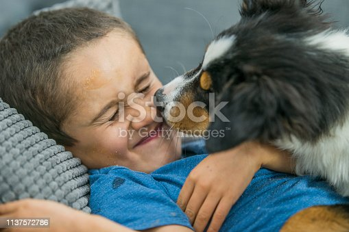 A young boy laughing as his border collie licks his face. They are lying down on a couch.