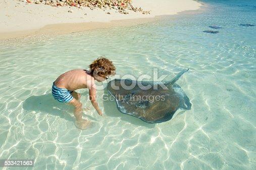 Little boy (4 years old) playing with stingray - Bahamas - Exuma