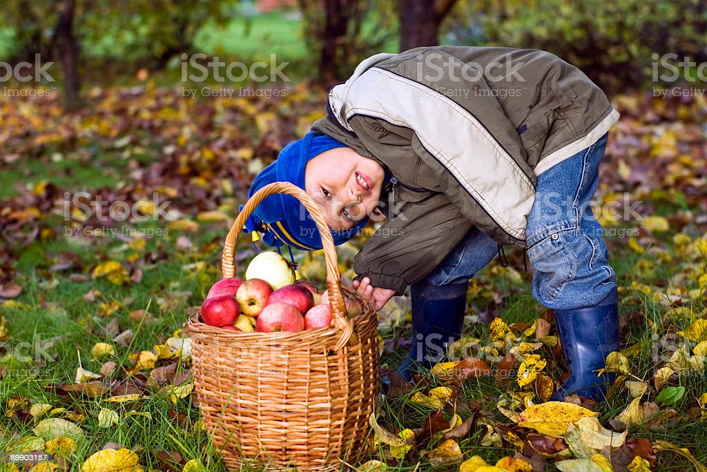 little boy posing outdoors with apples royalty-free stock photo