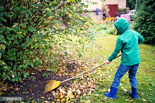 Kids raking autumn leaves. Little boy helping to clean autumn leaves from the garden lawn. Nikon D850