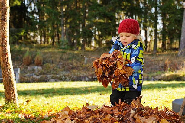 Little boy raking leaves in the autumn stock photo