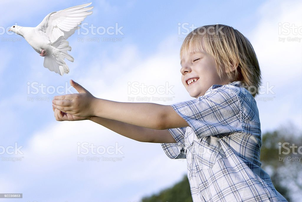 Little boy releasing a white pigeon in the sky stock photo
