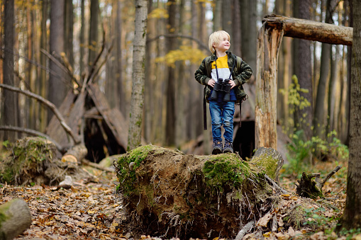 Little boy scout with binoculars during hiking in autumn forest. Child is looking through a binoculars.