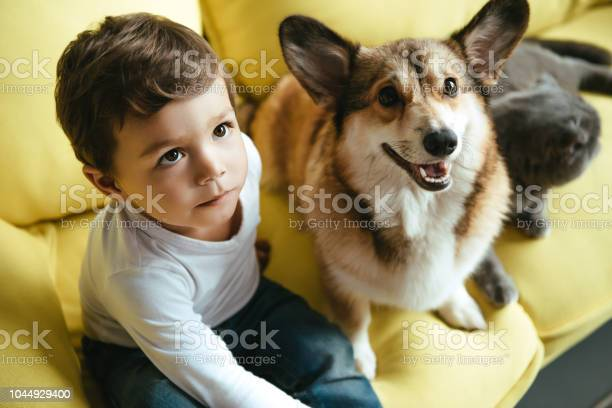 Little boy sitting on sofa with cat and welsh corgi dog picture id1044929400?b=1&k=6&m=1044929400&s=612x612&h=0foteedcnaiuxxmp1ljppdorcspoukhing7k37pzlh0=