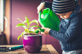 Little boy taking care of a plant in spring season