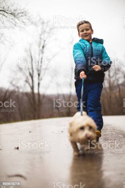 Little boy walking his dog picture id895618218?b=1&k=6&m=895618218&s=612x612&h=d3dcxzwqxxcvquixi6tjqutmqwu0p3chtwhoum7umua=